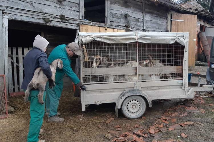 Ministarstvo poljoprivrede isplatilo 93 milijuna kuna u Sisačko-moslavačkoj županiji i gradu Vrgorcu stradalom u poplavi – poljoprivrednike pozivaju da stoku ne prodaju